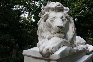 abney lion