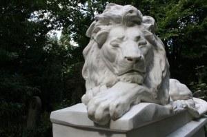 abney lion