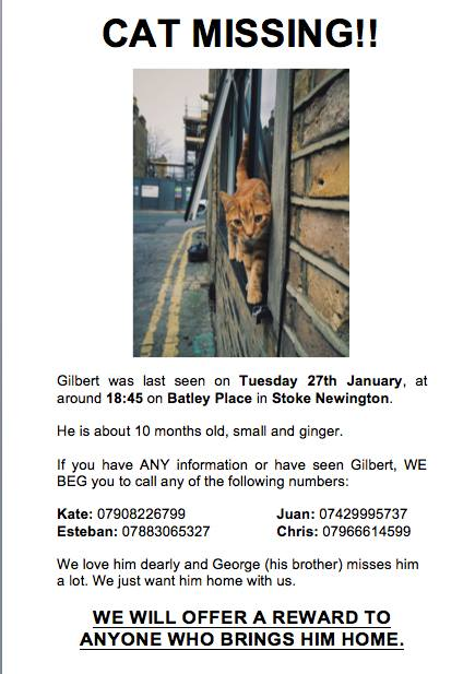 Missing Cat Gilbert